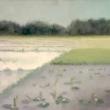 paesaggio-di-risaie-1980-olio-su-tela-30x40