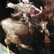 Saladino-e-il-suo-scudiero-100x70-