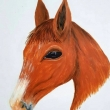 Horse-acrilico-Sharon-Cosimo