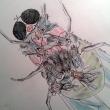 mosche-su-mosca