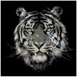 Severe-Tiger-29800-Cystals-from-Swarovski®-su-plexiglass-80x80-cm.-2018