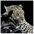 Thoughtful-Leopard-22800-Crystals-from-Swarovski®-su-plexiglass-70x70-cm.-2018