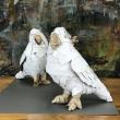 cacatua-scultura-con-cartone-riciclio-2020-30x30x35