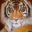 ritratto-pittura1-olio-su-tela-50X70