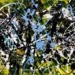 Tecnica: acrilico,vernice Dimensioni: 90x30x2 cm Supporto: tela di cotone Data: 07/10/2016