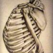 14_Studi-anatomici_