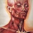 15_Studi-anatomici