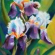 iris-pastelli-soft