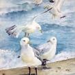 seagulls-1-watercolor