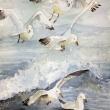 seagulls-2-watercolor