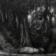 Giochi-di-luce-nel-bosco